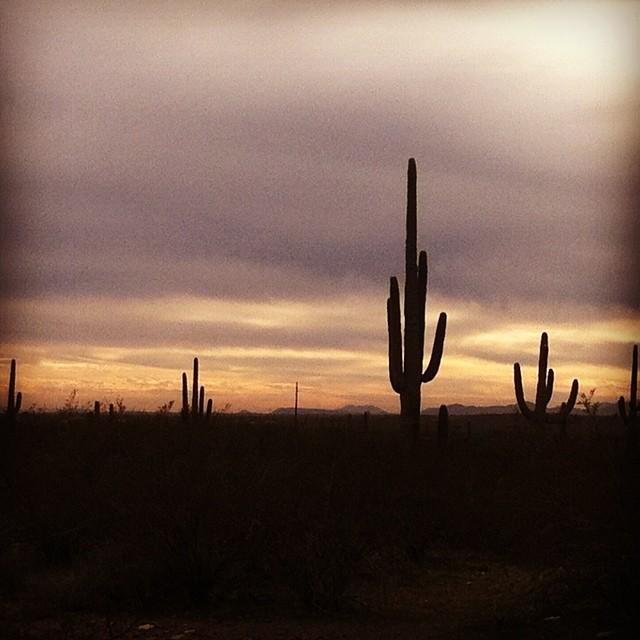 desertliving2